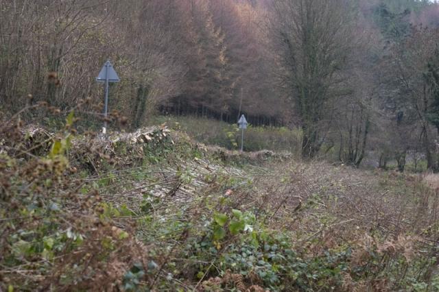 Collard bridge hedge laying